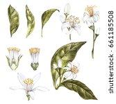 set of hand drawn watercolor... | Shutterstock . vector #661185508