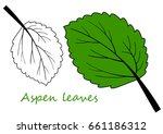 Green Leaf Of Aspen. Vector...