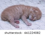 Stock photo small ginger cat kitten kitten sleeping domestic cat newborn kitten orange kitten one week old 661224082