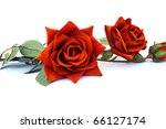Red roses isolated on white background. - stock photo