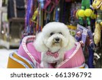 Stock photo white poodle dog in pet store 661396792