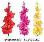 vector set with red  pink and... | Shutterstock .eps vector #661416652