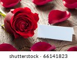 a rose with petals and tag - stock photo
