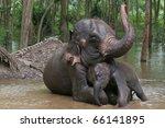 relationship  thai elephant ... | Shutterstock . vector #66141895