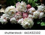 peonies  dark background | Shutterstock . vector #661432102