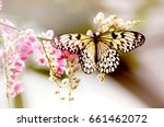 Stock photo butterfly and pollen sweet flowers 661462072