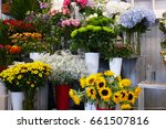different blooming flowers in...   Shutterstock . vector #661507816