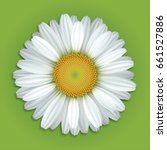 Flower White Daisies On A Gree...