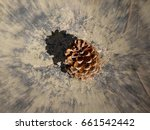 Small photo of Abstract focal zoom photo of an isolated ponderosa pine cone and its shadow; See Canyon in Arizona