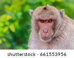 Long Tailed Macaque Or Crab...