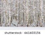 russian birches. russian winter ...   Shutterstock . vector #661603156