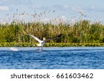 landscape photo of white... | Shutterstock . vector #661603462