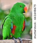 a male eclectus parrot ... | Shutterstock . vector #661648675
