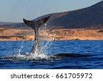 whale fluke splashing in the...   Shutterstock . vector #661705972