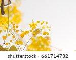 summer flower | Shutterstock . vector #661714732