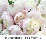 peony. peony flowers. peony set....   Shutterstock . vector #661740442