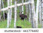moose. bull moose   eurasian...   Shutterstock . vector #661776682