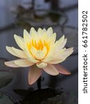 blooming lotus flower | Shutterstock . vector #661782502
