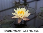 blooming lotus flower | Shutterstock . vector #661782556