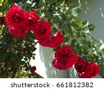 The Garland Of Red Roses  ...