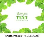framework from young green... | Shutterstock . vector #66188026