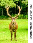 deer with big horns | Shutterstock . vector #661904782