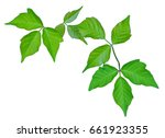 Poison Ivy Isolated To Provide...