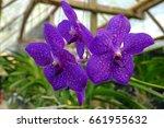 orchid flower | Shutterstock . vector #661955632