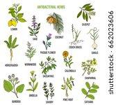 best antibacterial herbs. hand... | Shutterstock .eps vector #662023606