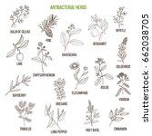 best antibacterial herbs. hand...   Shutterstock .eps vector #662038705
