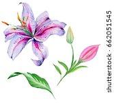wildflower lily flower in a... | Shutterstock . vector #662051545