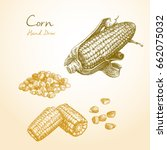 corn. hand drawn sketch style... | Shutterstock .eps vector #662075032