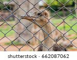 Ostrich In The Cage