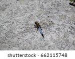 dragonfly | Shutterstock . vector #662115748