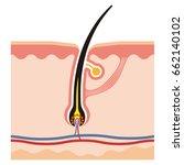 illustration of hair root | Shutterstock .eps vector #662140102