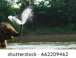 Elephant Blow Water Out From...
