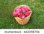 basket with roses on the grass | Shutterstock . vector #662358706