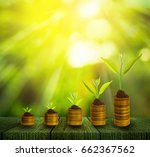 young plant growth on soil... | Shutterstock . vector #662367562