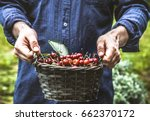 organic fruit. farmers hands... | Shutterstock . vector #662370172