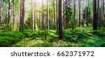 forest. wild plants and trees.... | Shutterstock . vector #662371972