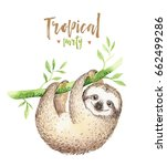 baby animals sloth nursery... | Shutterstock . vector #662499286