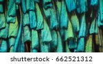 Stock photo extreme magnification butterfly wing under the microscope 662521312