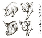 sketches of pigs drawn by hand. ... | Shutterstock .eps vector #662535862
