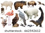 set of various north american... | Shutterstock . vector #662542612