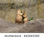 cute prairie dogs are hugging...   Shutterstock . vector #662663182