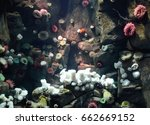selection of sea anemones... | Shutterstock . vector #662669152
