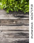 old wood floor and green leaf | Shutterstock . vector #662671918