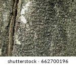 Small photo of grey birch bark texture