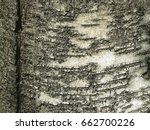 Small photo of white and grey birch bark texture