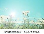retro cosmos flower fields... | Shutterstock . vector #662755966
